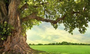 Premier Tree